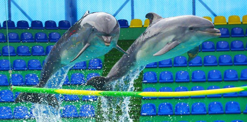 Отдых с детьми в Сочи в Дельфинарии