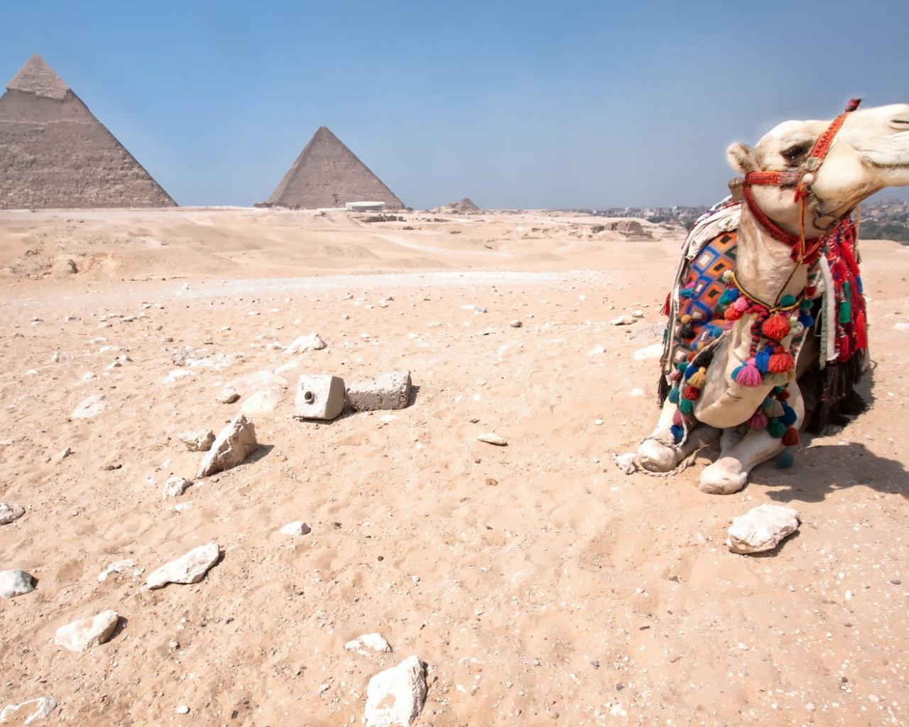 Экскурсии в египетскую пустыню