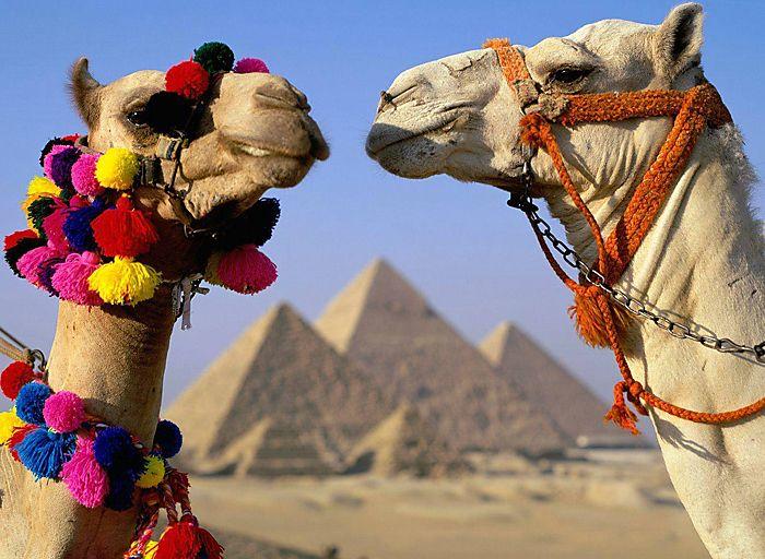 Египет из Волгограда