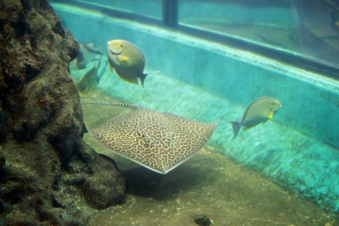 Океанариум Пхукета
